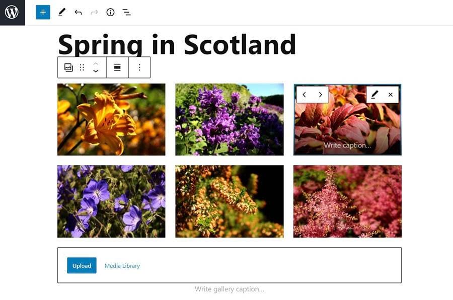 Adding an image gallery in WordPress.